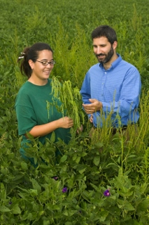 Herbicide tolerant crops section